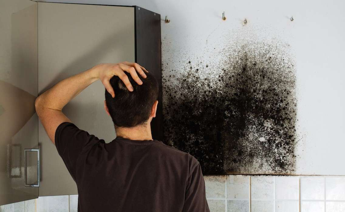 Black Mold Removal Costs