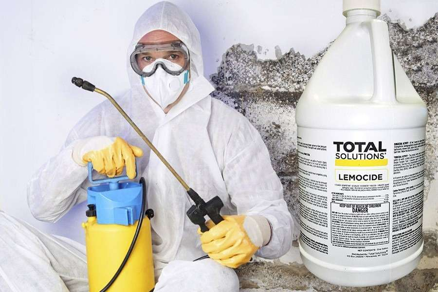 Mold Removal Costs